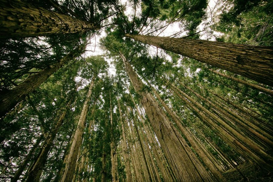Rodzaje i gatunki drewna