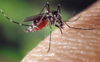 Dlaczego komary mnie gryzą?